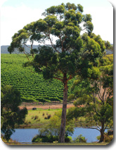 Karribindi Vineyard View